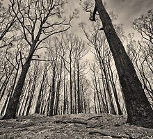 Rise from the ashes  by mellosphoto