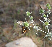 butterfly on flower by arnau2098