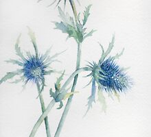 Sea Holly by Anita Murphy