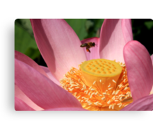 Bee and lotus Canvas Print