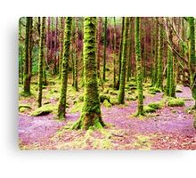 A Walk Among the Mossy Giants Canvas Print