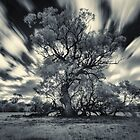 Old Tree in the wind by mellosphoto
