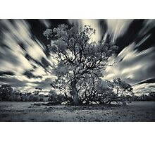 Old Tree in the wind Photographic Print