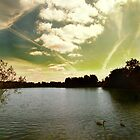 Swans and Sky at Thatcham Lakes by Samantha Higgs