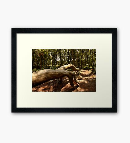 Shows Us The Way - Fallen Tree, Bowdown Woods Framed Print