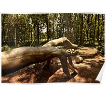 Shows Us The Way - Fallen Tree, Bowdown Woods Poster