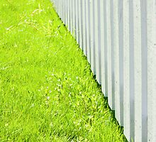 White fence and fresh green grass close-up by Stanciuc