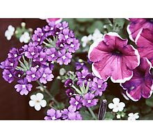 Pretty Faded Purple and Pink Flowers Photographic Print