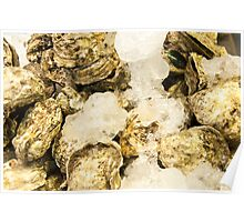 Fresh oysters on ice, seafood close-up Poster