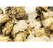 Fresh oysters on ice, seafood close-up Photographic Print