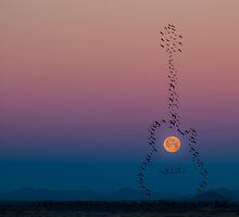 Song of the Moon by Randy Turnbow