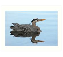 Great Blue Heron Swimming Art Print