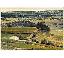 vintage vineyard landscape Photographic Print