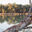 River Redgum by Linda Lees
