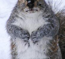 Shocked Squirrel Sticker