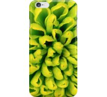 White and green flowers of chrysanthemum background iPhone Case/Skin