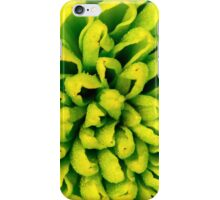 Chrysanthemum green flower closeup, abstract background iPhone Case/Skin