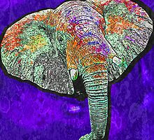 Elephant of a different color by Rob Cox