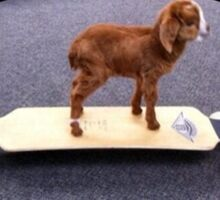 Skater Goat Sticker