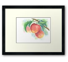 Watercolor Painting of Apples on a Tree with Defocused Background  Framed Print