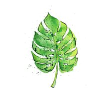 Watercolor Painting of a Philodendron Leaf  Photographic Print