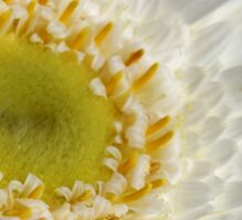 White Gerbera Sticker