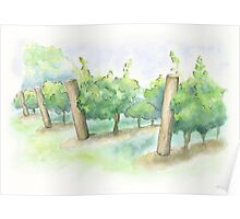 Watercolor Painting of a Vineyard Poster
