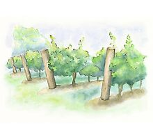 Watercolor Painting of a Vineyard Photographic Print