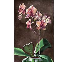 Kaleidoscope Phalaenopsis Orchid Photographic Print