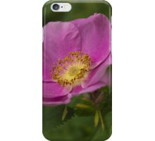 Swamp rose blossom iPhone Case/Skin