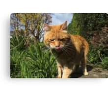 Ginger cat licking lips in garden Canvas Print