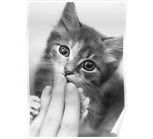 Kitten Kisses Poster