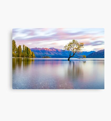 That Wanaka Tree Canvas Print