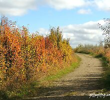Fall Colour by getmycamera