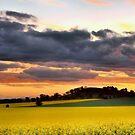 Canola Sunset by julie anne  grattan