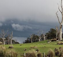 Oatlands countryside with wedge tailed eagle  by gaylene