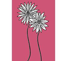Two Daisies  in Black and White Transparent Background Photographic Print