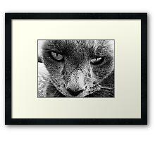 JASPER! Framed Print