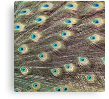 Beautiful Peacock Feathers Canvas Print