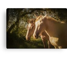 Two Andalusian horses in the early morning Canvas Print