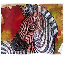 Curious Zebra Poster