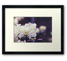 Rhododendron Daze Framed Print