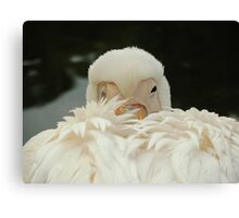 Is it morning already? Canvas Print