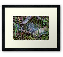 Dewy Ground Web Framed Print