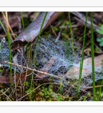 Dewy Ground Web Sticker