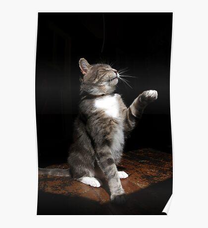 Aloof cat Poster