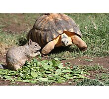 Sharing with Friends Photographic Print
