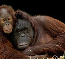 Infant Orangutan and Mum by JMChown