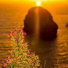 virgin rock with wild flowers sunset by morrbyte