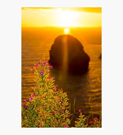 virgin rock with wild flowers sunset Photographic Print